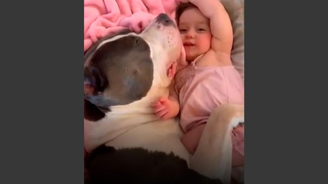 Bebê e cachorro - Uma dupla que é puro amor e encanto