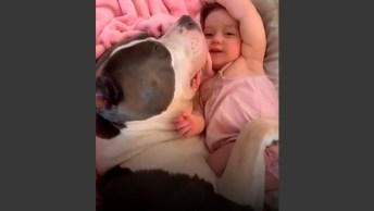Bebê E Cachorro - Uma Dupla Que É Puro Amor E Encanto, Confira!
