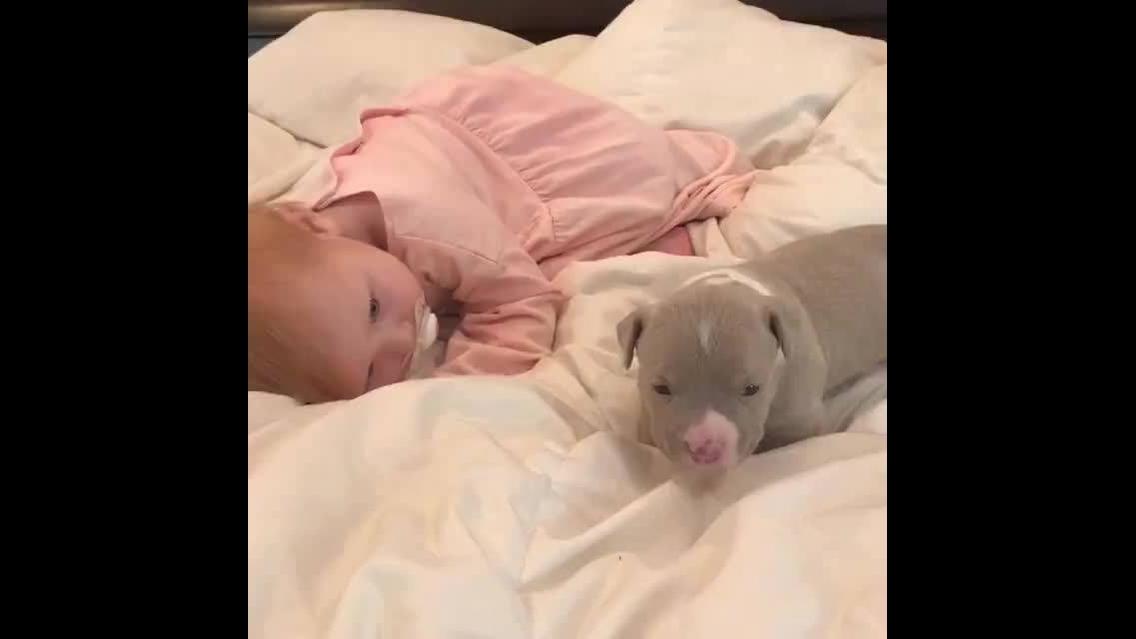 Bebê humano e bebê cachorro, uma dupla muito fofa