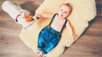 Bebê Se Divertido Com Cachorro Engraçado - Para Rir E Compartilhar!