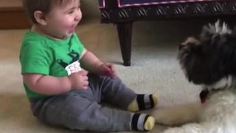 Bebês Dando Risadas Ao Ter Contatos Com Cachorros, As Risadas Mais Divertidas!