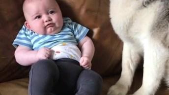 Bebês E Cachorros, A Amizade Mais Sincera Do Mundo, Confira!