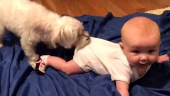 Bebês E Cachorros, Essa Dupla Sempre Faz A Gente Dar Risadas!