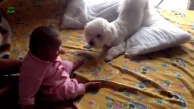 Bebês E Cachorros, Tem Dupla Melhor Que Essa? Muito Fofos!