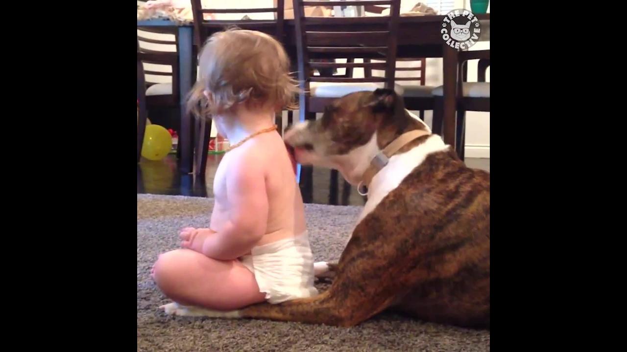 Bebês e cachorros, uma dupla que não tem como não amar