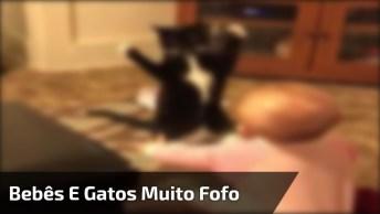 Bebês E Gatos Podem Viver Na Mesma Casa? Veja A Resposta No Vídeo!