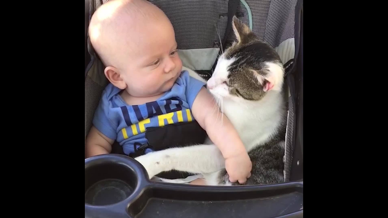 Bebês e gatos