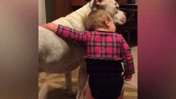 Bebês E Seus Amiguinhos De Estimação, Uma Combinação Perfeita!