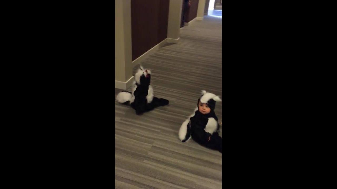 Bebês fantasiados de gambás, o vídeo mais fofinho que você vai ver hoje!!!