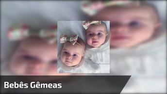 Bebês Gêmeas, Olha Só Que Doçura Este Vídeo, Vale A Pena Conferir!