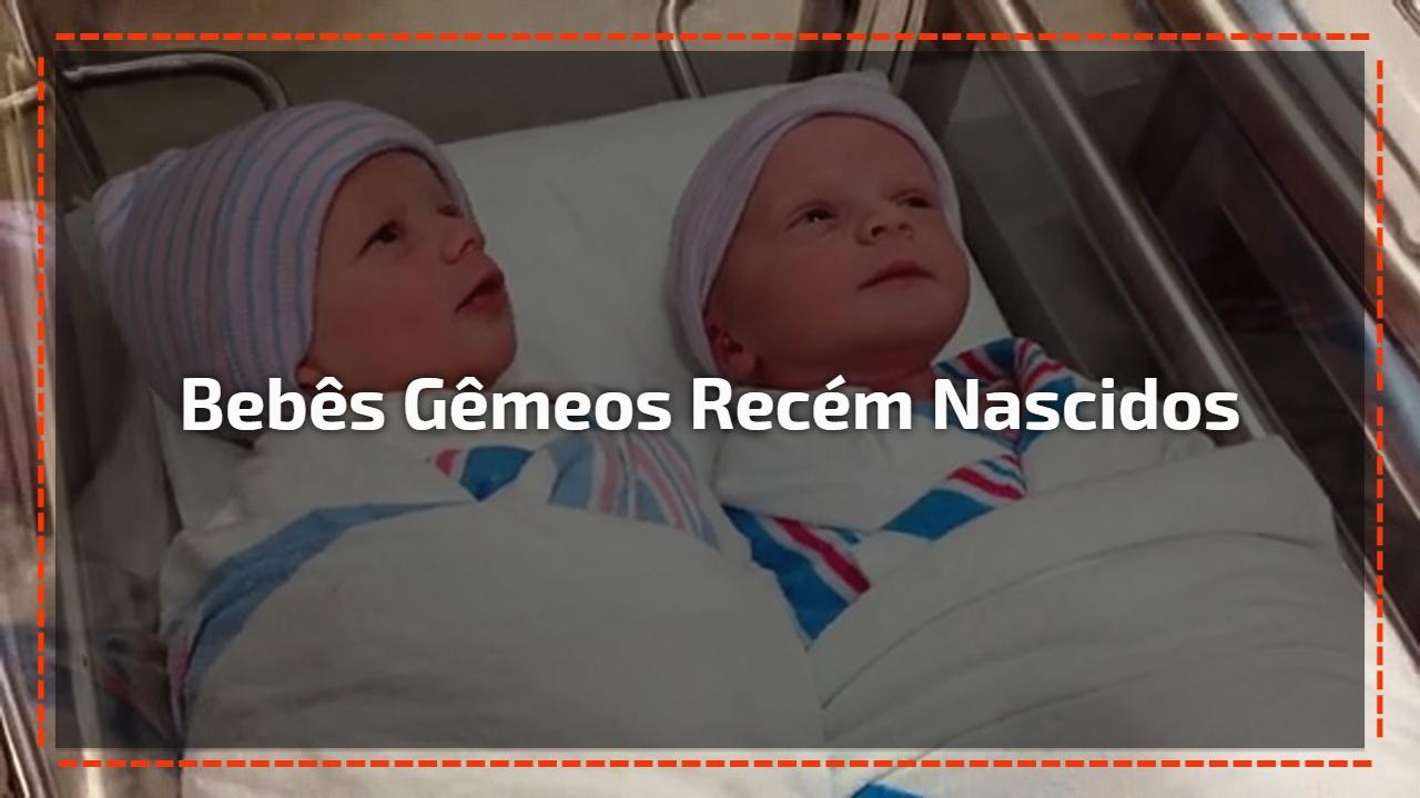 Bebês gêmeos recém nascidos