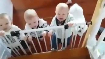 Bebês Querendo Ultrapassar A Grade, Que Fofura Multiplicada!