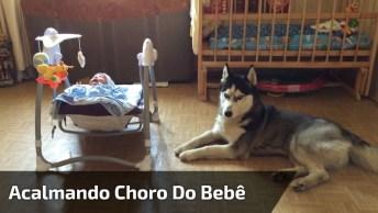 Cachorro Consegue Acalmar Choro De Bebê Apenas Com O Seu Uivo!