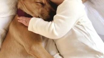 Cachorro E Bebê Podem Dormir Juntos? Saiba Mais E Compartilhe!