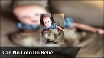 Cachorro Ganhando O Melhor Colo Do Mundo, O Colo De Um Bebê!