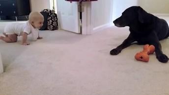 Cachorro Inspira Bebê A Engatinhar Até Ele, Que Cena Mais Linda!