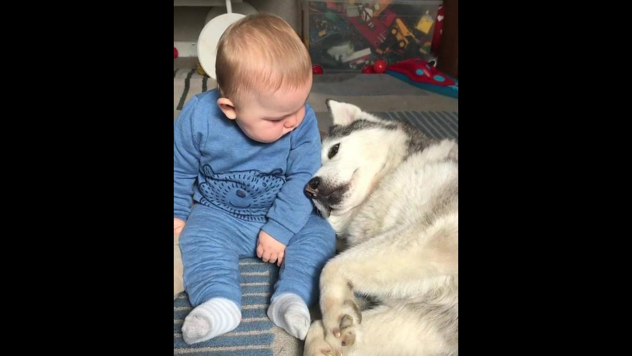 Cachorro pedindo colo para bebê