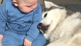 Cachorro Pedindo Colo Para Bebê, Um Vídeo Fofo Para Compartilhar No Facebook!