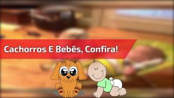 Cachorros E Bebês, Um Vídeo Que Não Tem Como Não Amar, Confira!