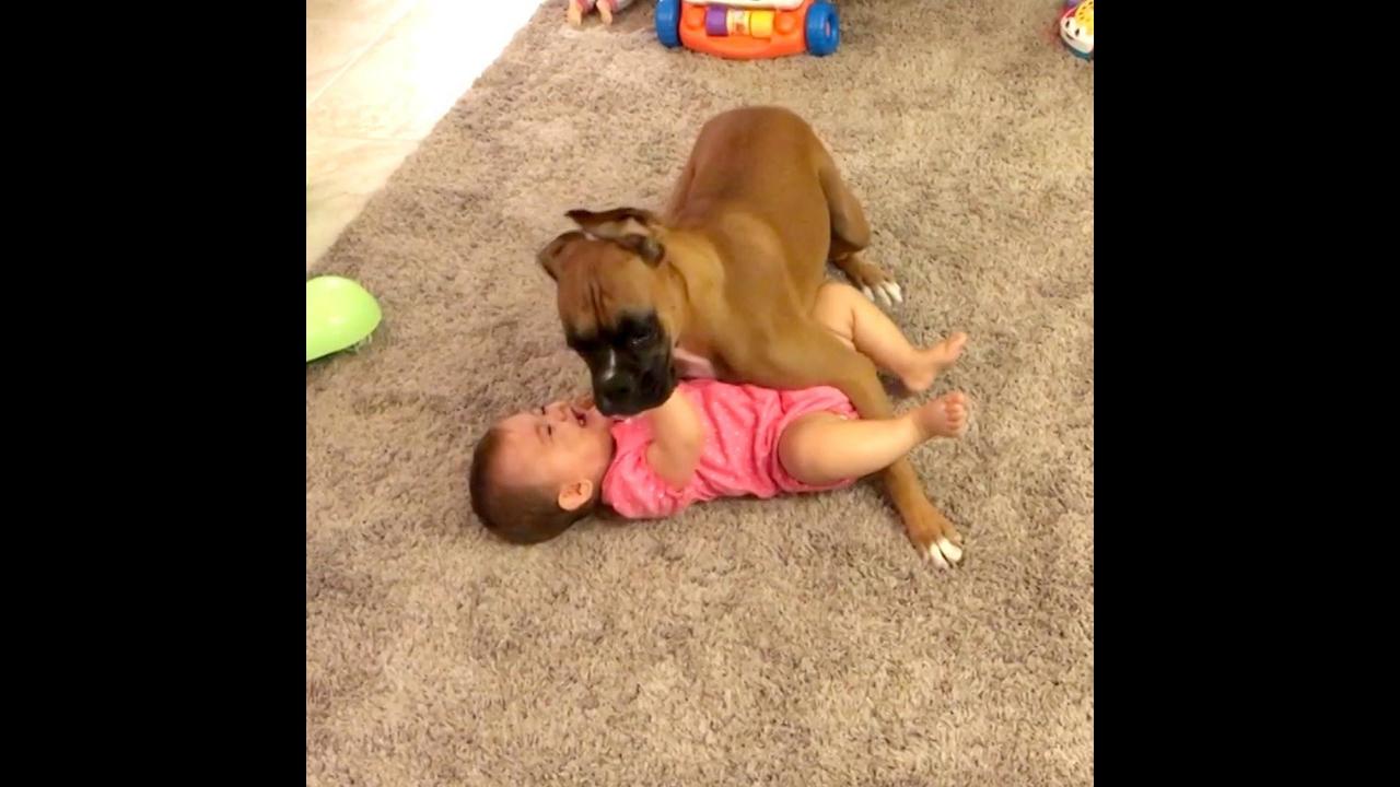 Cachorros que fazem os bebês darem as melhores risadas