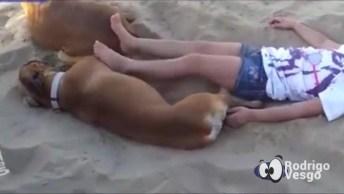 Cachorros São Dóceis, Na Maioria Das Vezes, Mas Esse Ai Resolveu Se Vingar!