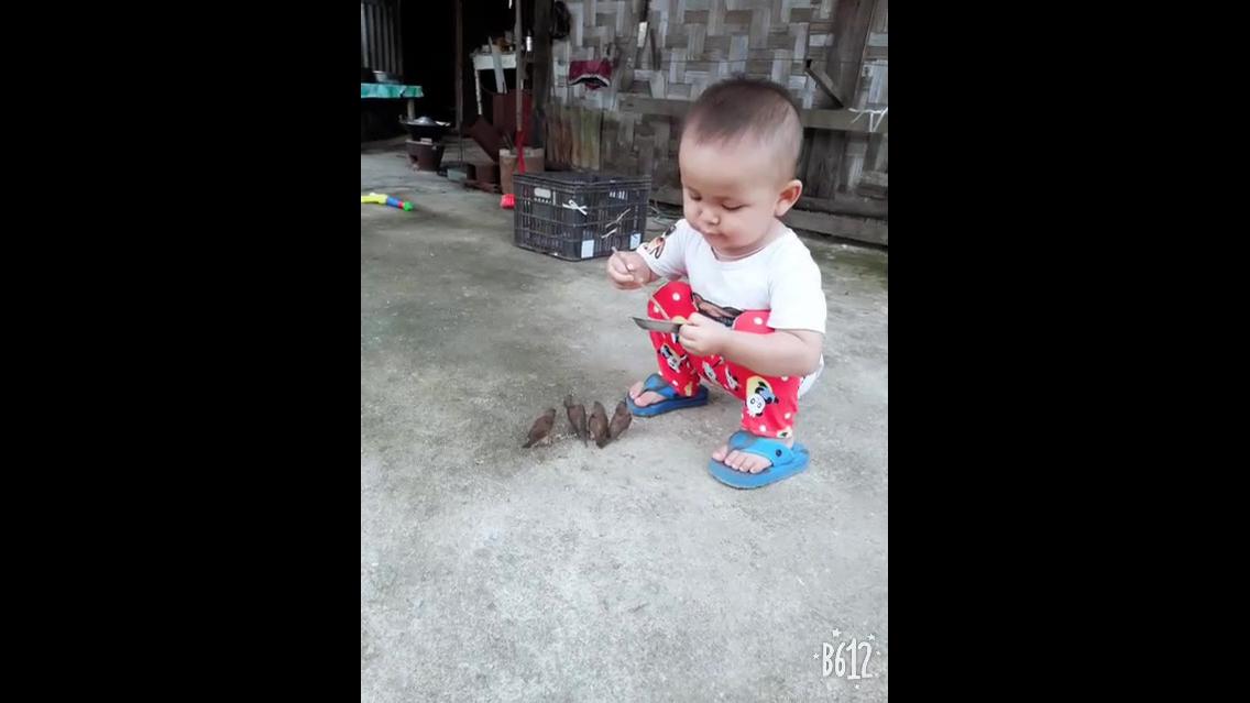 Criança alimentando passarinhos