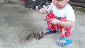 Criança Alimentando Passarinhos, Esse É O Vídeo Mais Fofo Que Vai Ver Hoje!