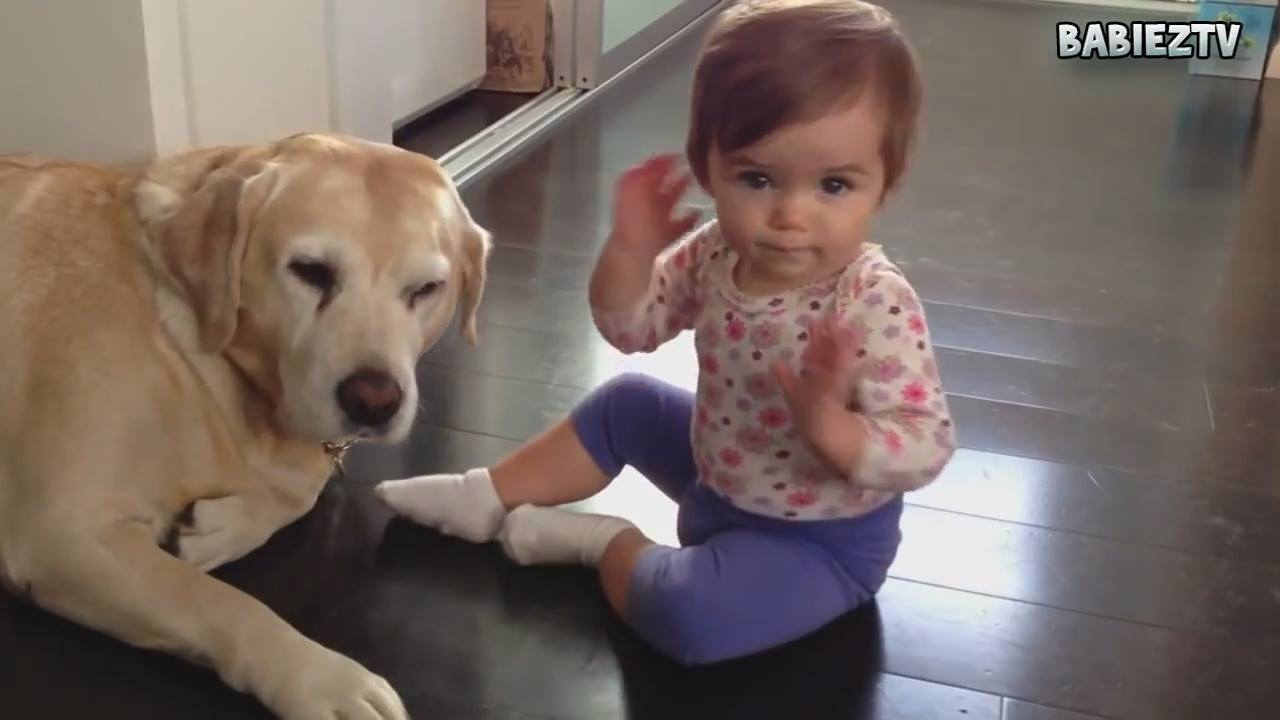 Melhores momentos de bebês e seus cães