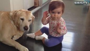 Melhores Momentos De Bebês E Seus Cães, Um Mais Fofo Que O Outro!