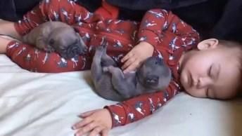 Momento Fofura Do Dia, Veja Só Este Três Dormindo, É Muito Lindinho!
