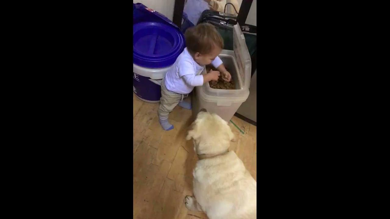 Vídeo com bebê dando comida para os cachorros