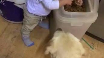Vídeo Com Bebê Dando Comida Para Os Cachorros, Olha Só Que Esperto!