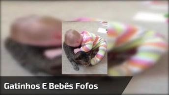 Vídeo De Bebês Brincando Com Seus Gatinhos, Olha Só Que Fofinhos!