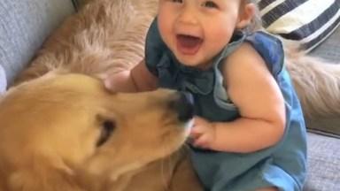 Amizade Entre Cachorro E Crianças, A Amizade Mais Verdadeira Do Mundo!