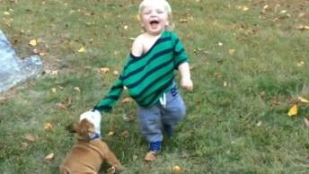 Cachorro Versus Crianças Brincando, Brigando E Se Atrapalhando. . .