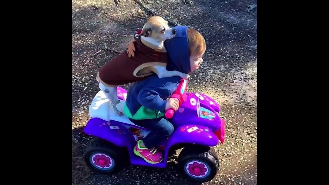 Cachorros e crianças se divertindo