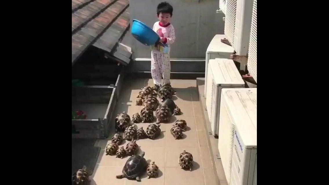 Criança alimentando seus animais de estimação