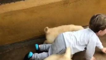 Criança Brincando Com Filhotes De Cachorros, Você Vai Adorar!