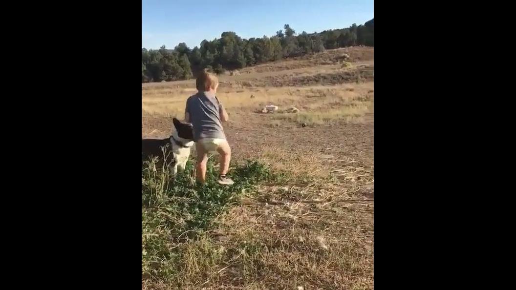 Criança brincando de jogar bola pro cachorro de uma maneira divertida