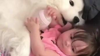 Criança Ganhando Lambidas Do Cachorro Enquanto Segura A Mamadeira!