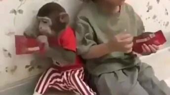 Criança Irritado Com Macaco Guloso, Ele Quase Não Consegue Comer!