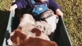 Criança Sendo Carregada Em Carrocinha Com 4 Filhotes De Cachorros!