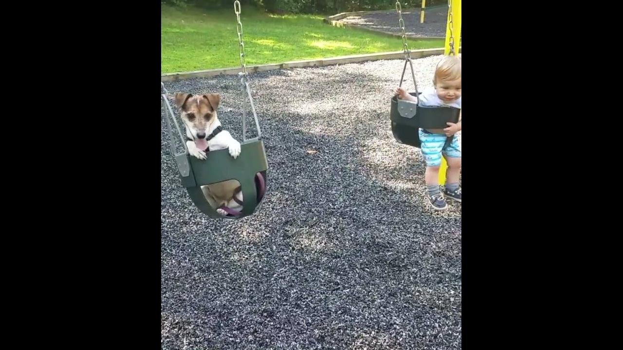 Crianças e animais - Uma amizade que dá muito certo