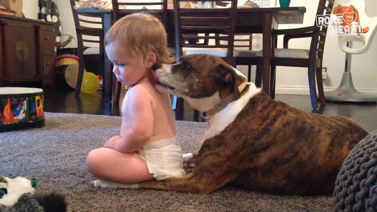 Crianças e animais, uma dupla adorável e muito fofa de ver