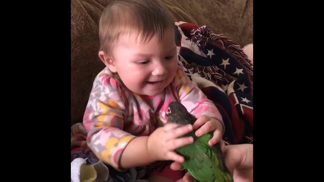 Crianças e as situações mais engraçadas com aves