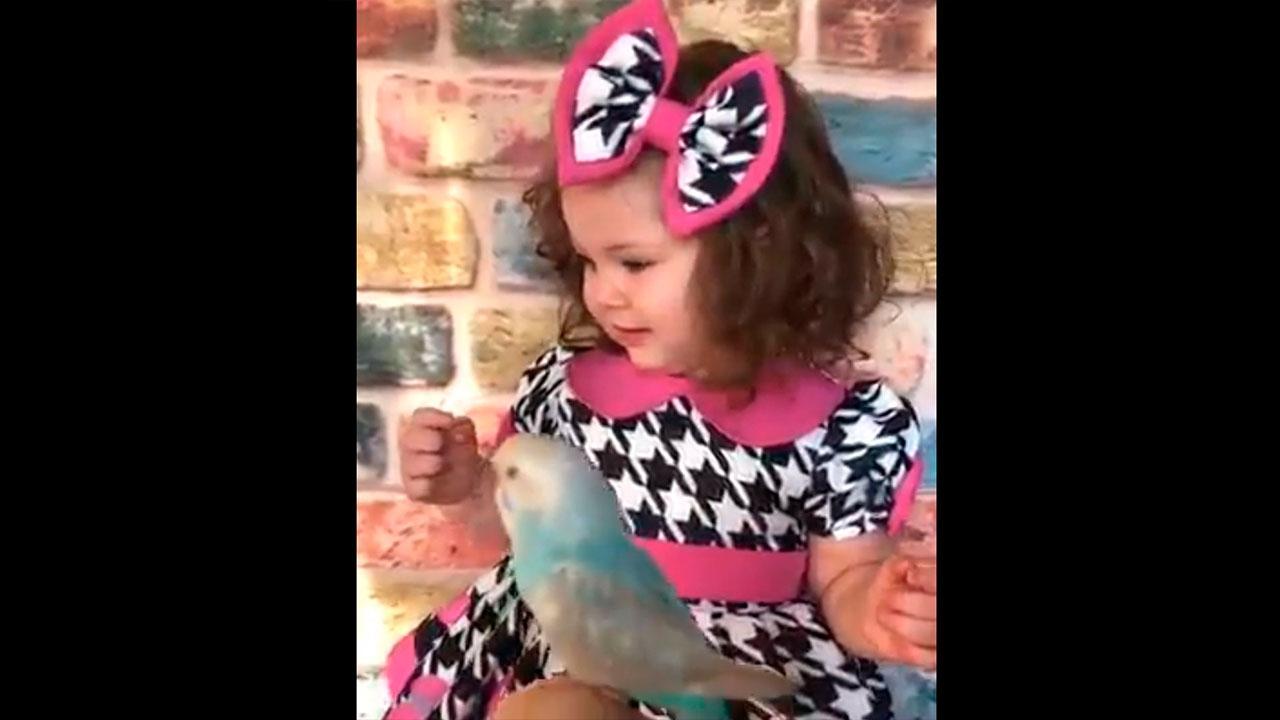 Garotinha quer fazer carinho no passarinho mais tem medo, veja que fofa!!!