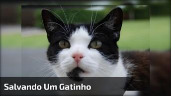 Gato Fica Com Rabo Preso Em Cerca, Mas Bombeiros Vem Para Salvá-Lo!
