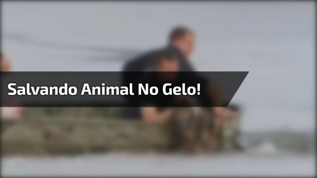 Salvando animal no gelo!
