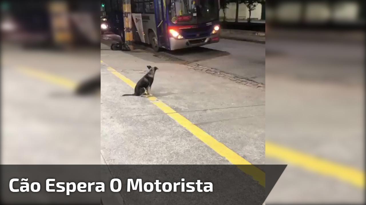 Cão espera o motorista