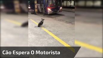 Motorista De Ônibus Trás Petiscos Todos Os Dias Para Uma Cachorra, Linda Atitude